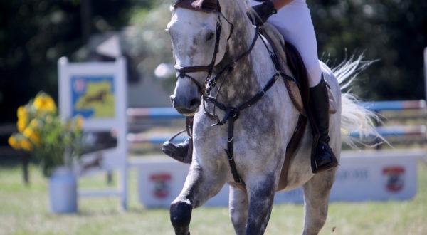 Cheval au concours hippique du Mont-de-Coeuve